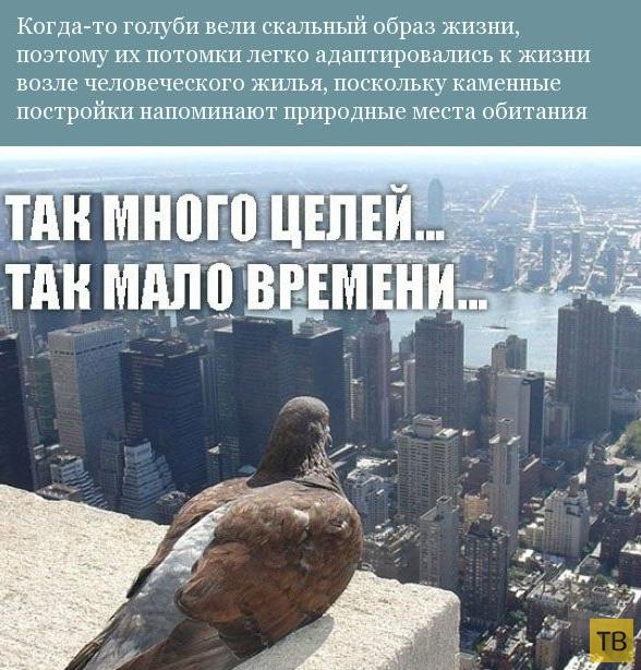 Прикольная орнитология (13 фото)