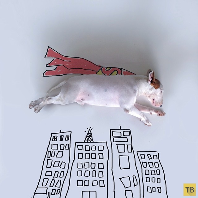 Прикольные иллюстрации с бультерьером от бразильского иллюстратора Рафаэля Мантессо (Rafael Mantesso) (13 фото)