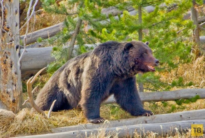 Йеллоустонский национальный парк (11 фото)