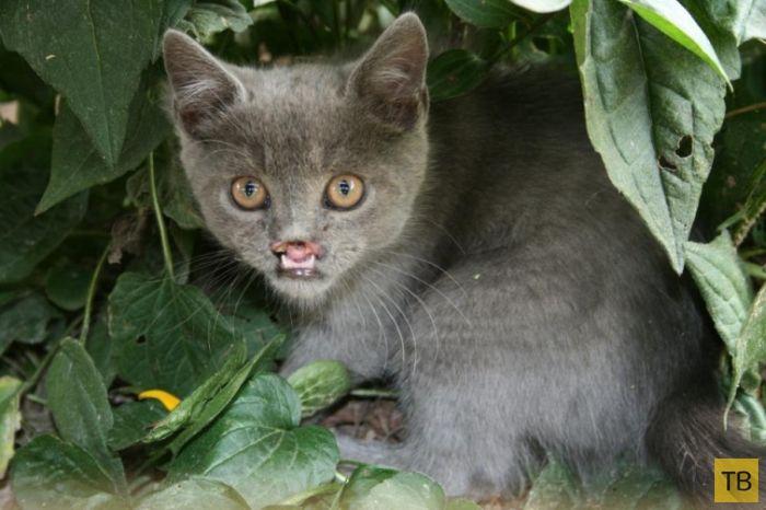 Вампирский кот Лазарь - новая звезда интернета (32 фото)