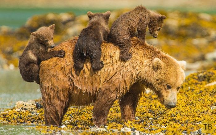 Самые интересные и забавные фотографии животных за неделю (15 фото)