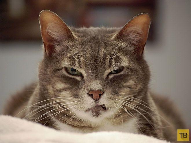 Забавные любимчики - котики (16 фото)
