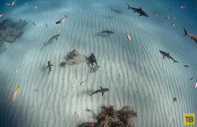 Удивительный мир акул (13 фото)