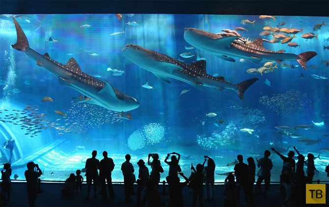 Рифовые акулы опасны для человека