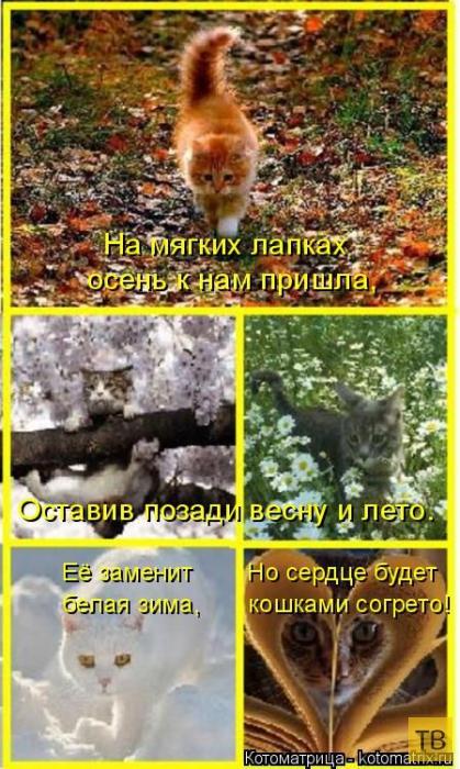 Прикольные котоматрицы (49 фото)