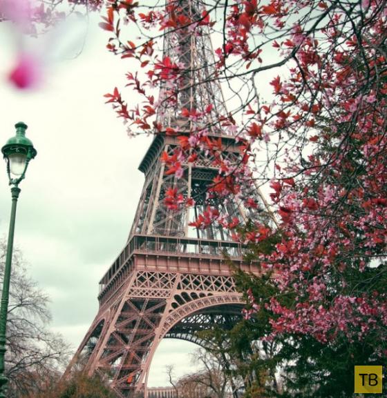 Хочу во Францию (22 фото)