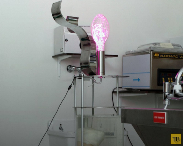 Голландец пытался продать на eBay необычный светильник (9 фото)
