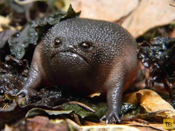 Топ 19: Самые необычные животные (19 фото)