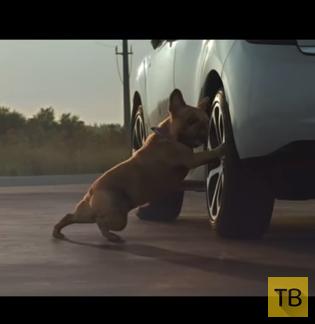 Cобака делает растяжку в рекламе Citroën