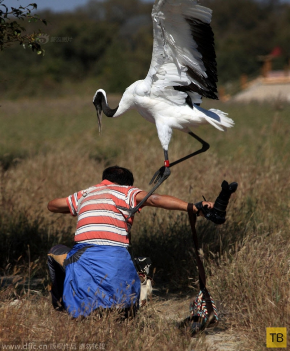 Бой журавля и фотографа (10 фото)