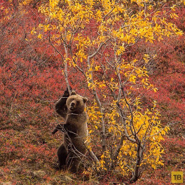 Фотографии с животными из Instagram'а National Geographic (28 фото)