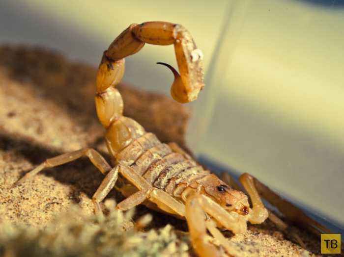 Топ 9: Самые смертоносные животные (10 фото)