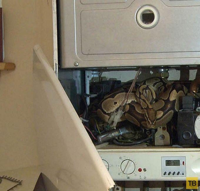 Неожиданный сюрприз внутри водонагревателя (8 фото)