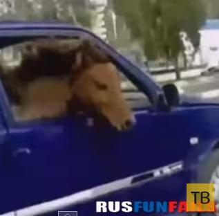 Русские приколы...