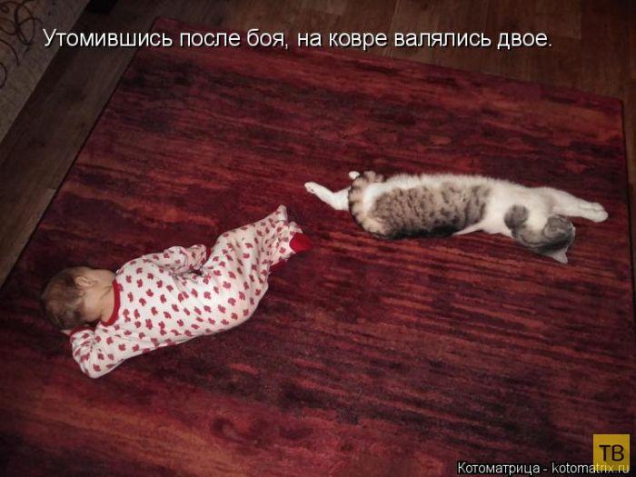 Лучшая котоматрица недели (50 фото)