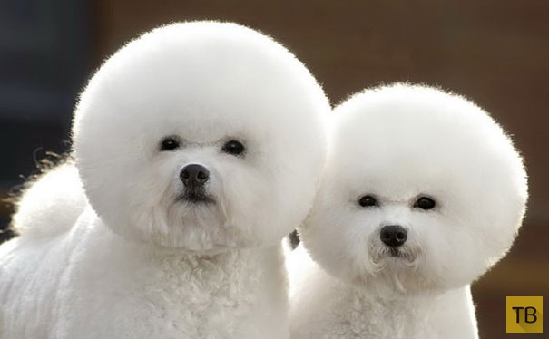 Животные - близнецы (23 фото)
