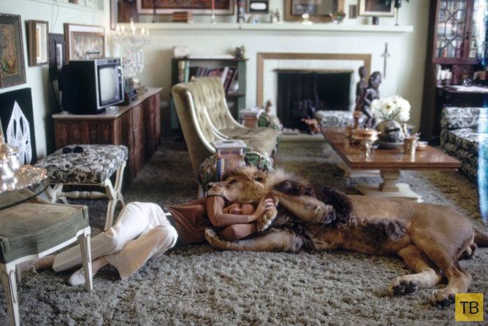 Лев Тогар - домашний питомец (7 фото)