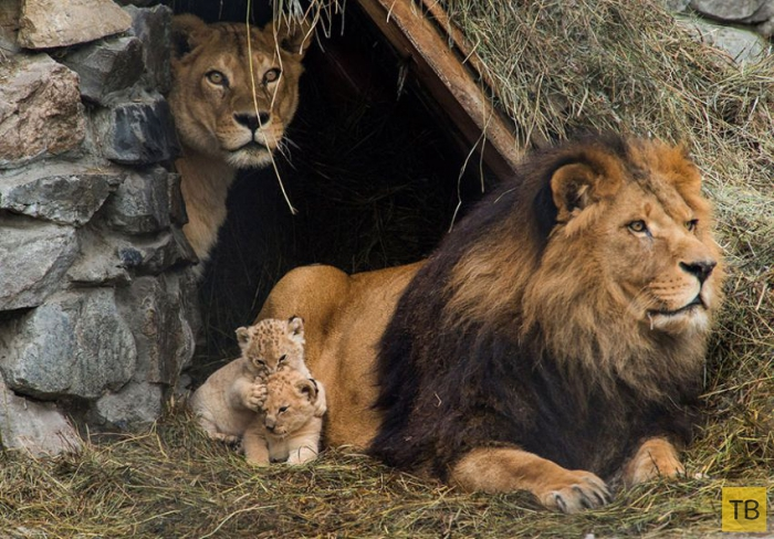 Семейные фотографии животных (29 фото)