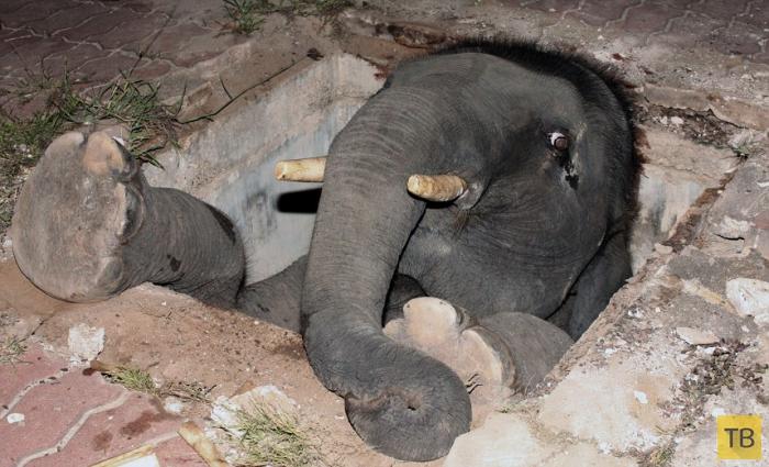Животные, застрявшие в странных местах (14 фото)