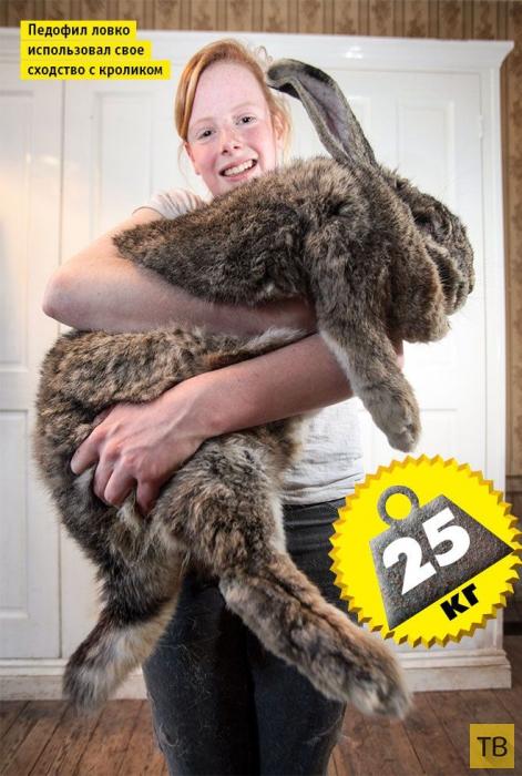 Топ 9: Животные-переростки (9 фото)