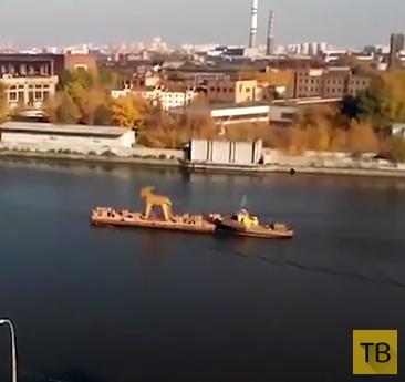 Козел плывет по Москва-реке