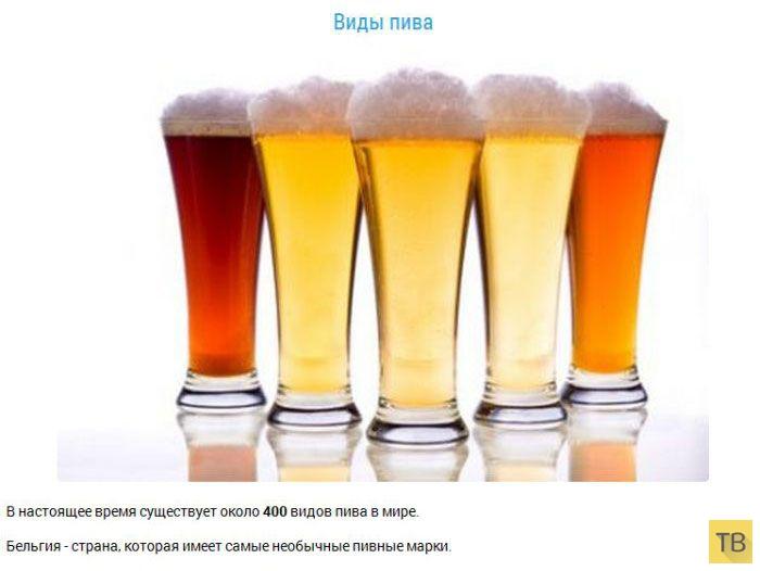 Пиво и самые интересные факты о нем (22 фото)