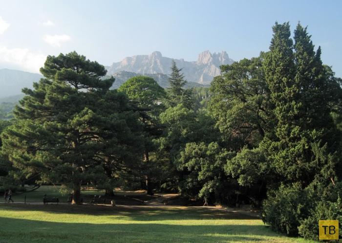 Алупкинский парк в Крыму (10 фото)