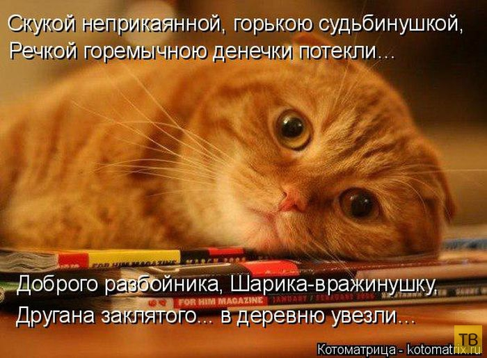 Прикольная котоматрица (50 фото)
