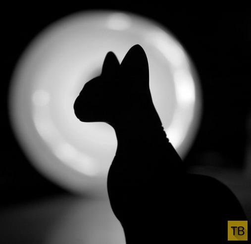 Интересные факты о суевериях (14 фото)