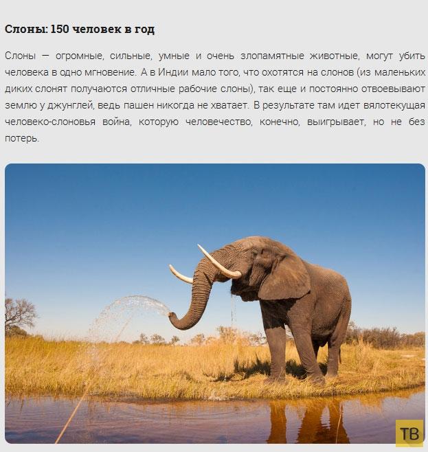 Топ 17: Животные-убийцы (17 фото)