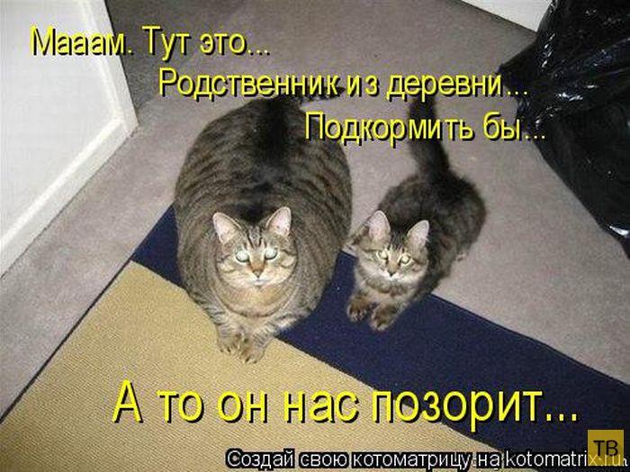 Лучшие котоматрицы недели, часть 14 (50 фото)