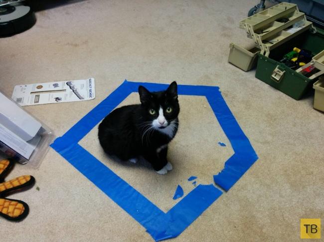 Простой способ обмануть своего кота (18 фото)