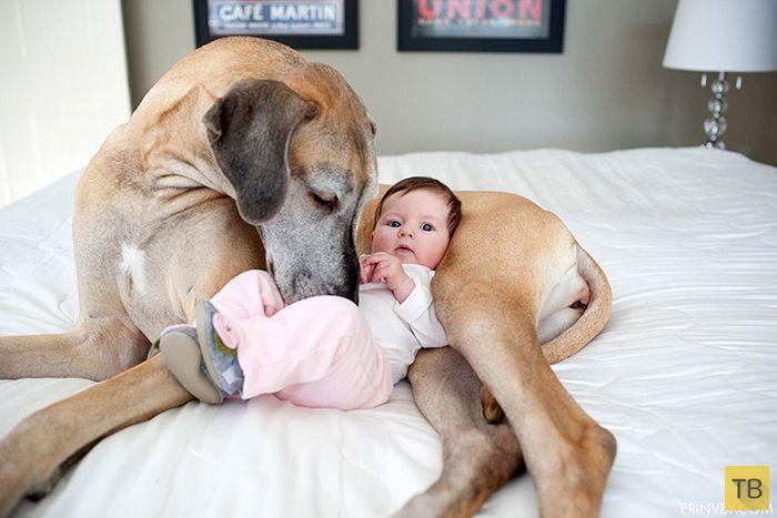 Милые фотографии с детьми и собаками, вызывающие положительные эмоции (26 фото)