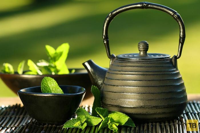 Полезные свойства зеленого чая (10 фото)