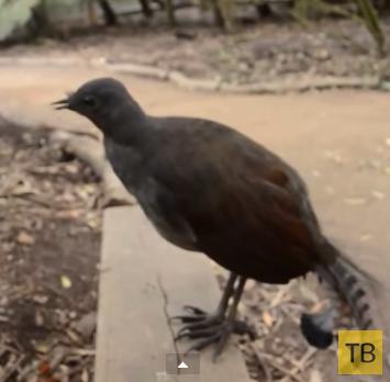 Птица издает странные звуки. R2D2, это ты?
