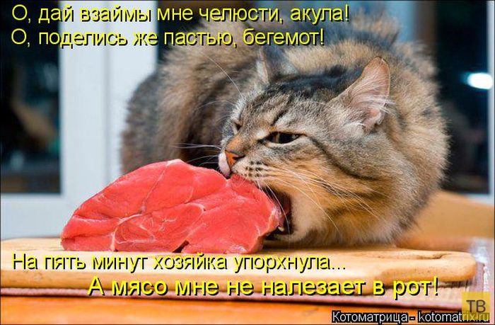 Лучшие котоматрицы недели, часть 16 (50 фото)
