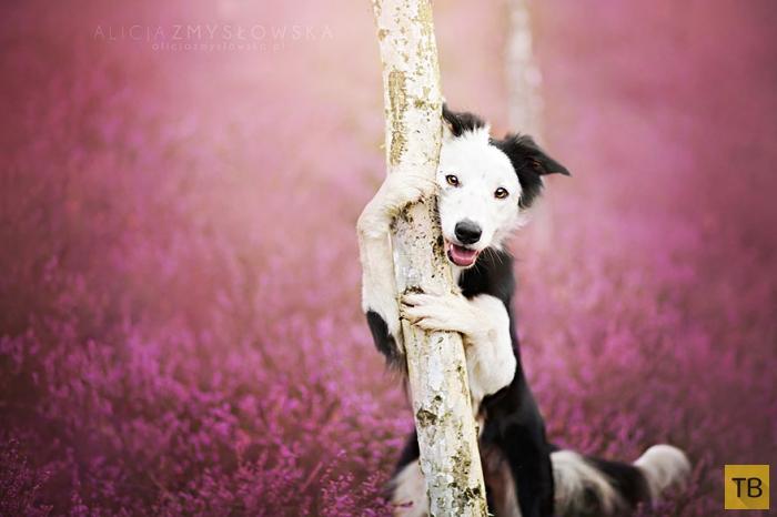 Фотографии собак от фотографа из Польши Алиции Змысловской (20 фото)